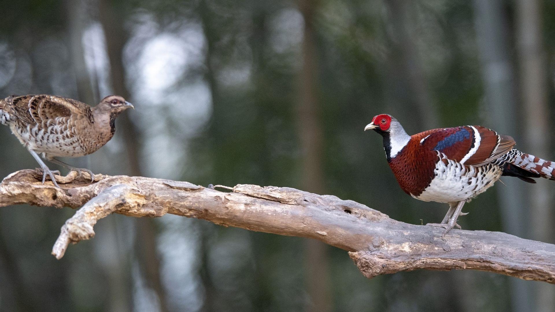 尋找初冬大美之鳥