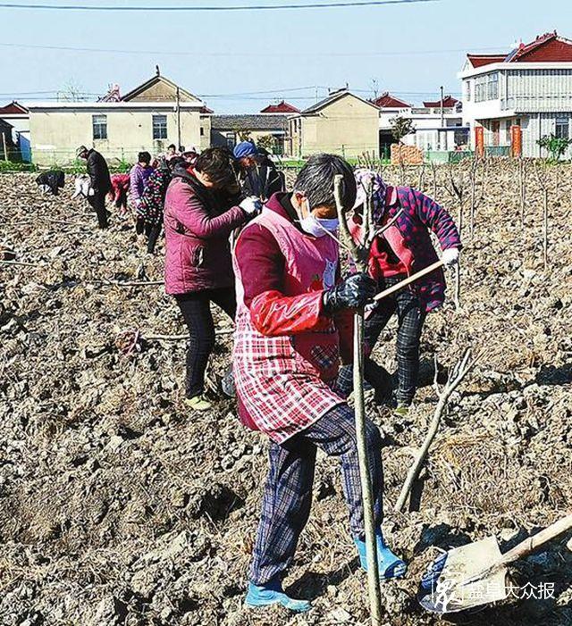 春耕时节,防疫植树两不误—— 村民合力种下16.3万株希望树