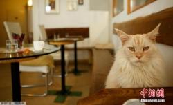 """爱尔兰宠物医院招""""抱猫师"""" 每日需抚摸猫咪6小时"""