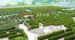 """大丰""""植物迷宫""""现雏形"""