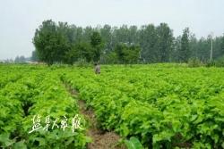 """特庸蚕桑产业凸显富民效应—— """"桑乐小镇""""乐农家"""