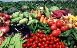 """""""三品一标""""全省第一 盐城农产品品质稳步提高"""