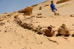 """埃及法尤姆""""鲸鱼谷"""":沙漠深处的古鲸博物馆"""