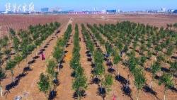 建湖县建阳镇 高效完成植树造林任务