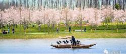响水县七套中心社区为乡村增绿添彩