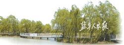 亭湖区盐东镇 问题导向做优环境