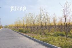 建湖县颜单镇新年目标:生态优先绿色发展