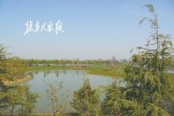 阜宁县陈集镇 量质并举确保绿化效果