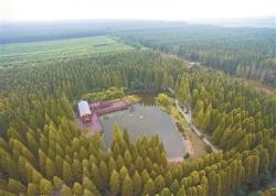 全市今年新建成片林15.62万亩