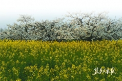 阜宁县阜城街道 建设生态宜居绿色家园