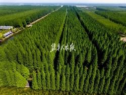 """栽下""""一片林"""" 處處好風景"""