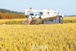 """""""截污减药""""让农业本色回归 全市今年农药使用量将实现零增长"""