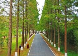 黄海国家森林公园亮相央视新闻直播间