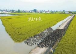 时时彩开户启动建设四家省级现代农业科技园 入选数全省第一