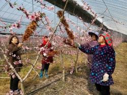 大冈特色桃果产业园花香景更美