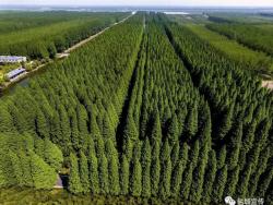 绿杨城郭新画卷!盐城沿海百万亩生态防护林建设带来浓浓绿意