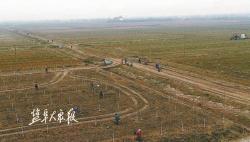 沿海生态防护林工程?#20013;?#25512;进 新建成片林15.62万亩,改造提升13.26万亩