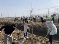 建湖绿化造林优化城乡生态