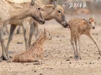 麋鹿寶寶萌萌噠