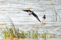 湿地春迁万鸟飞