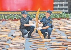海关:今年已查获走私象牙及制品8.48吨
