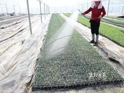 响水县七套中心社区 扎实抓好作物田间管理