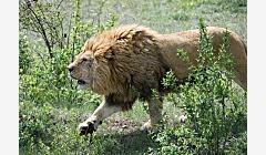 江苏查获省内最大规模濒危野生动物走私案