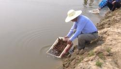 射阳人真聪明,水稻田里养殖小龙虾,种出了生态射阳大米,亩均效益杠杠的!