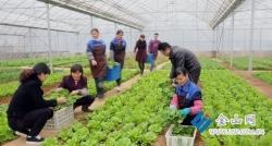 """【新时代 新作为 新篇章】农产品质量如何,""""码""""上有答案"""