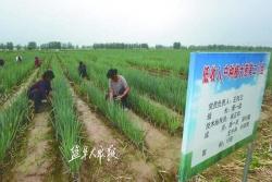 【乡村振兴】产业开花,农民收果