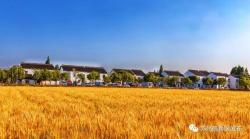 """【乡村振兴】苏州积极布局""""三村一体""""整体规划:打造离城市最近的美丽田园"""