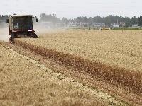 全國夏糧收獲已近八成