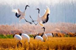 H5|鹽城黃海濕地申遺成功!你知道它究竟有多美嗎?
