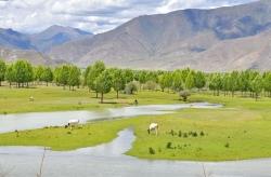 西藏:拉林公路夏日美