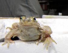 黄海湿地环资法庭作出首例判决 一村民捕捉50只青蛙被处罚