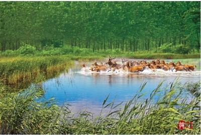 世界自然遺產——中國黃(渤)海候鳥棲息地(一期)官方宣傳片