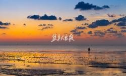 本报评论丨热烈祝贺黄海湿地申遗成功
