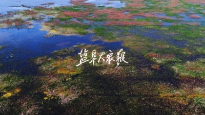 """為國際濕地保護作出""""鹽城貢獻""""——鹽城黃海濕地成功申遺引發熱議"""