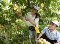 农家摘桃乐