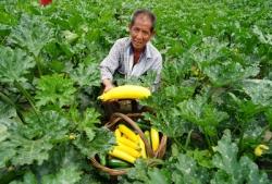 陜西太白:高山反季節種菜助增收