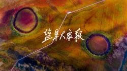 美图丨鹤舞鹿鸣  美美与共 盐城黄海湿地成功跻身世界自然遗产