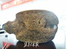 """大冈一鱼塘里浮起一块""""石头"""" 经初步鉴定为鲸鱼脊椎骨亚化石"""