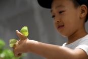 西安:暑期探索昆虫世界