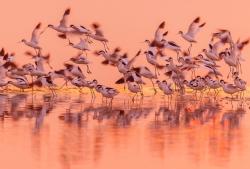 【新时代 新作为 新篇章】江苏盐城:穿越春夏秋冬的黄海湿地