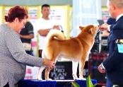 第22届亚洲宠物展迎来首个公众日