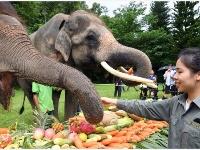 双版纳举行关爱亚洲象公益活动