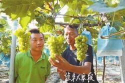 """聚焦""""四新"""" 丨圖說高質量發展 ⑧高效農業種出富民路"""