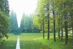 【盐城生态文化走访㉗】叫响湿地品牌,打造长三角知名康养胜地
