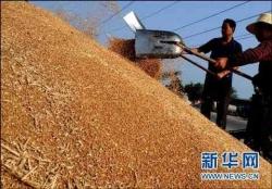 丰收成果颗粒归仓,全市已累计收购夏粮223万吨
