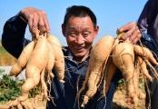 """迎接""""中国农民丰收节"""""""